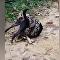 Tailandeses enfrentam píton gigante que estava asfixiando cachorro