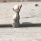 Cobra regurgita ovos para passar por corredor estreito (IMAGENS FORTES)