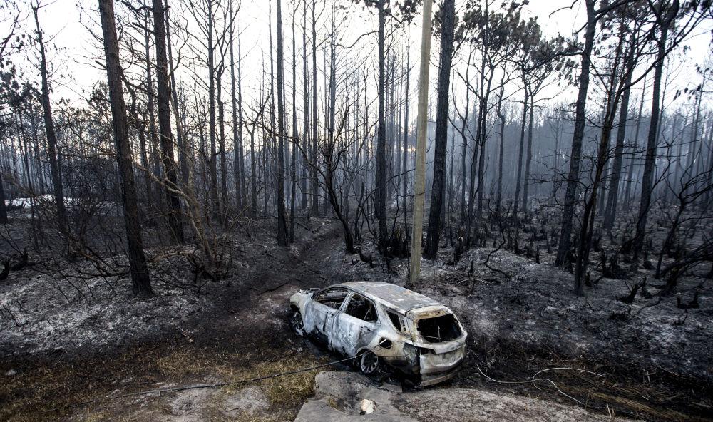 Carro destruído por fogo florestal em um bosque na Flórida