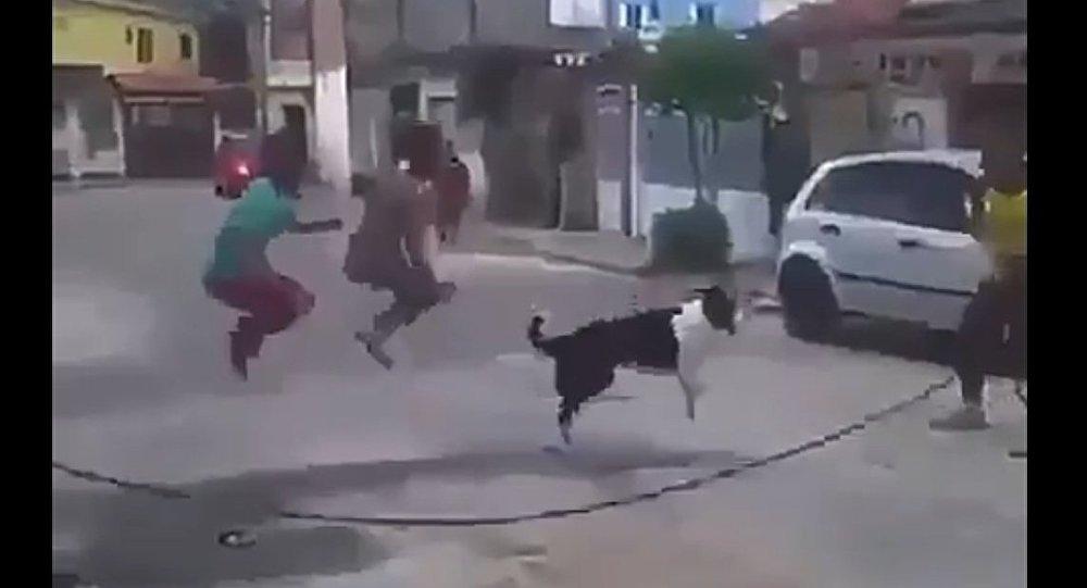 Cachorro se junta a crianças para pular corda na rua