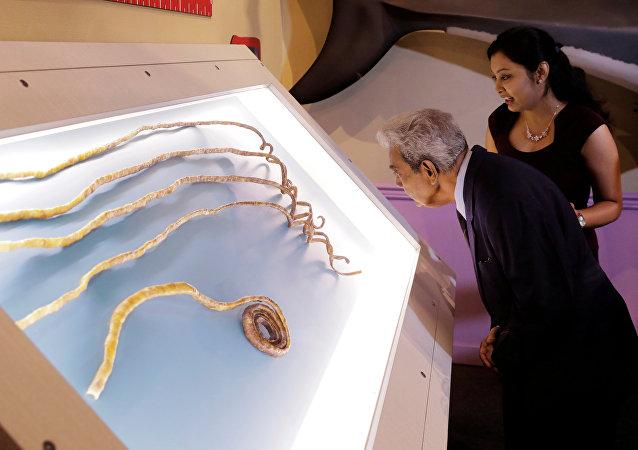Shridhar Chillal junto com sua neta Shraddha Chillal no museu de Ripley Believe it or Not! em Nova York, EUA, 11 de julho de 2018