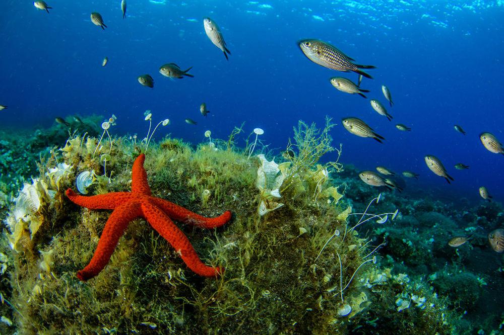 Estrela-do-mar nas águas próximas às Ilhas Líparas