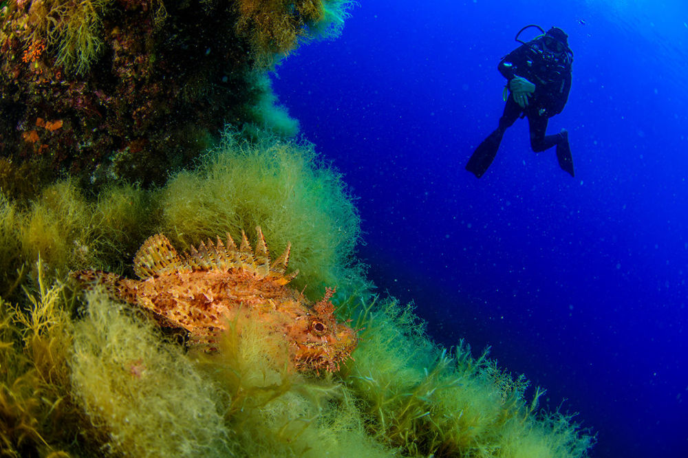 Mergulhador da expedição observando criaturas marinhas perto de um recife próximo às Ilhas Líparas