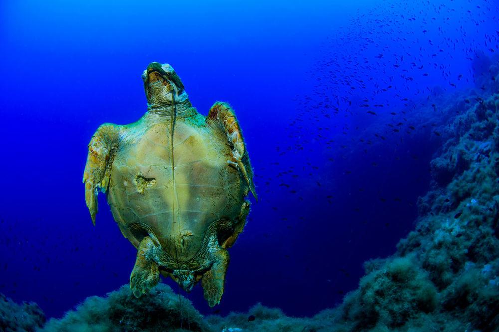 Uma tartaruga fotografada durante a expedição às Ilhas Líparas, Itália, realizada em maio de 2018