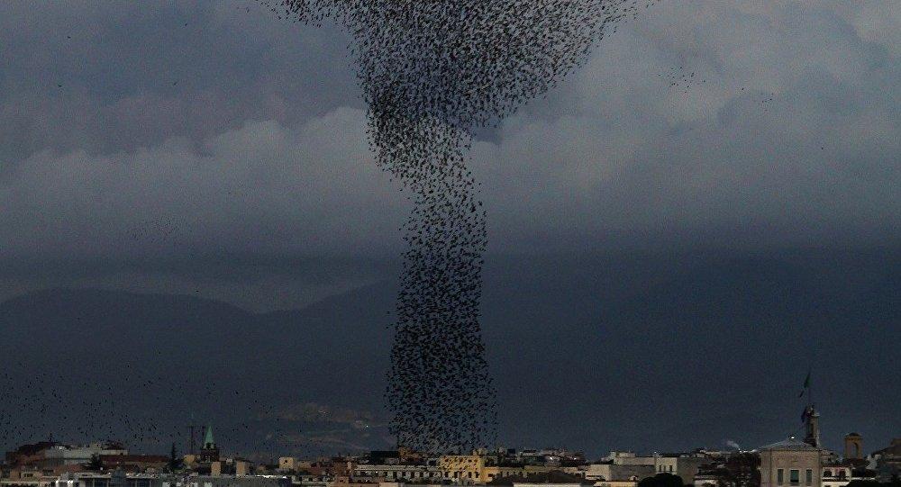 Milhões de moscas invadem cidade (imagem ilustrativa)