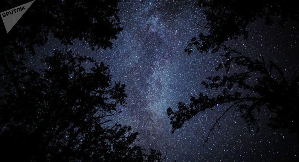 Pedaço de céu estrelado entre árvores de um bosque (imagem ilustrativa)