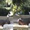 Homem dá tapa em bunda de hipopótamo no Zoológico de Los Angeles