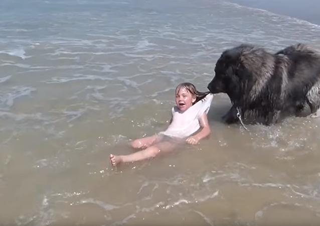 Cachorro arrasta menina para fora da água tentando protegê-la das ondas