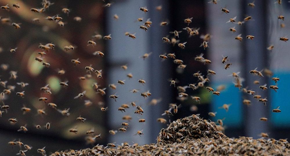 Um enxame de abelhas atacou uma barraca de cachorro-quente em Nova York, 28 de agosto