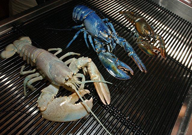 Rara lagosta branca é exibida ao lado de uma lagosta azul em um aquário de Boston (EUA), em 17 de setembro de 2004 (imagem ilustrativa)