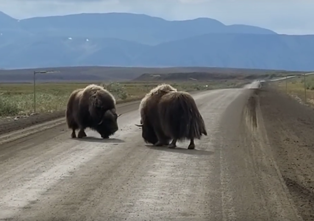Briga no Alasca
