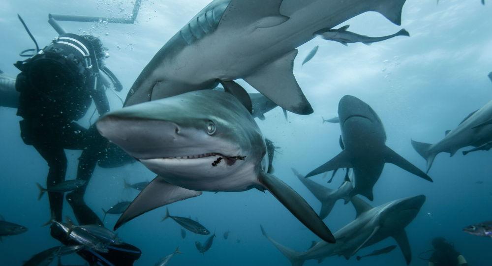 Mergulhador tirando fotos de tubarões