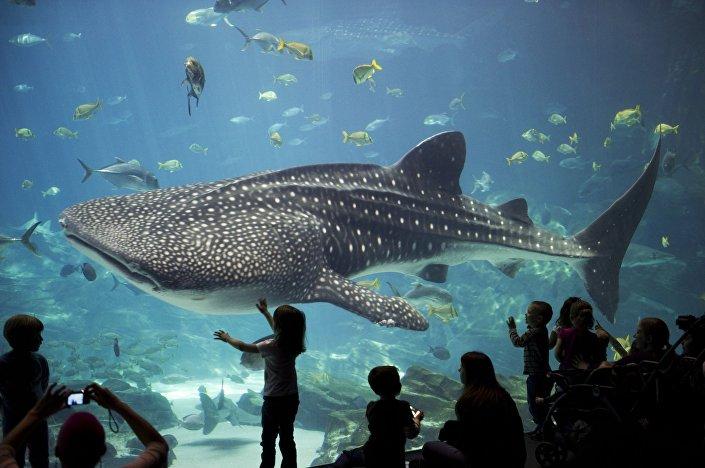 Visitantes observando um tubarão-baleia no Aquário da Geórgia, nos EUA