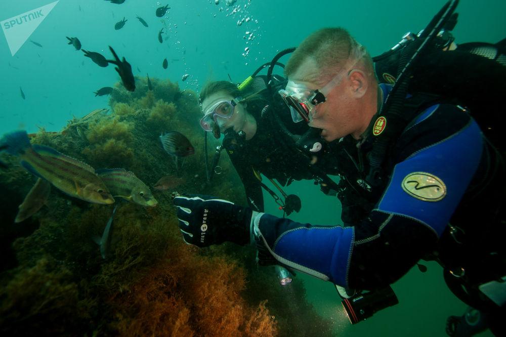Mergulhadores alimentam os peixes com mexilhões nas águas do mar Negro