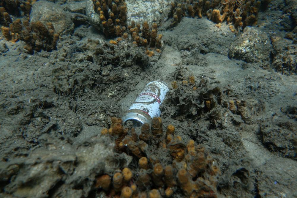 Lata de cerveja polui o habitat de criaturas marinhas perto da ilha de Tasos