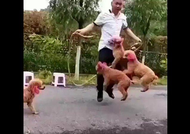 Cachorros pulando corda