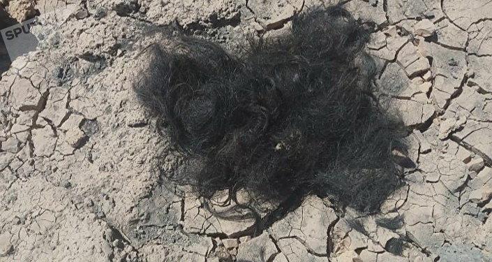 Barbas encontradas pelos soldados sírios na área montanhosa do deserto de As-Suwayda