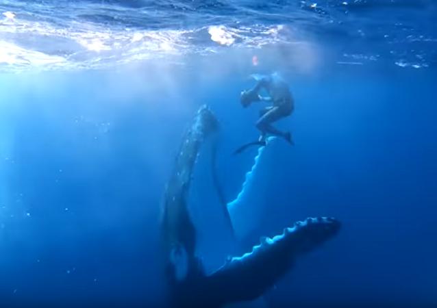 Baleia jubarte brincalhona mostra seu melhor a mergulhador