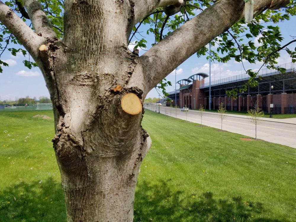 Árvore sorridente