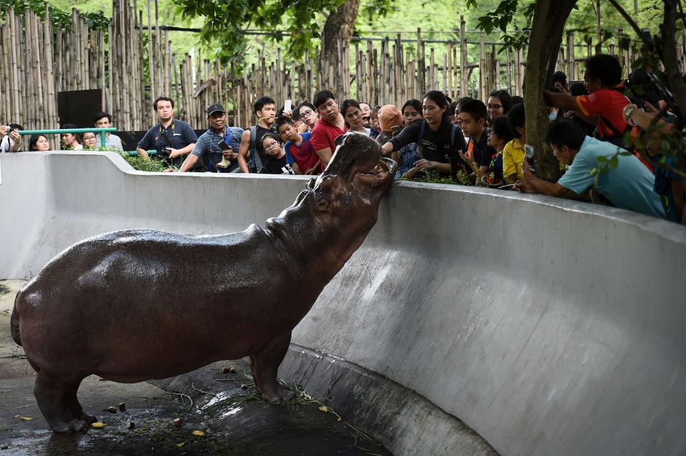 Visitantes dão comida ao hipopótamo-do-nilo em um jardim zoológico em Bangkok, na Tailândia