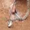 Veja o que fazer se encontrar uma cobra na rede de pesca