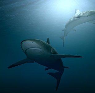 Dois tubarões