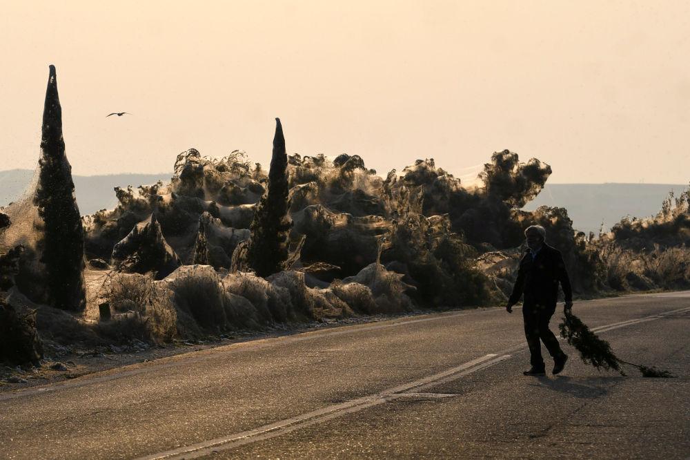 Teia de aranha cobre toda a área perto do lago grego de Vistonida