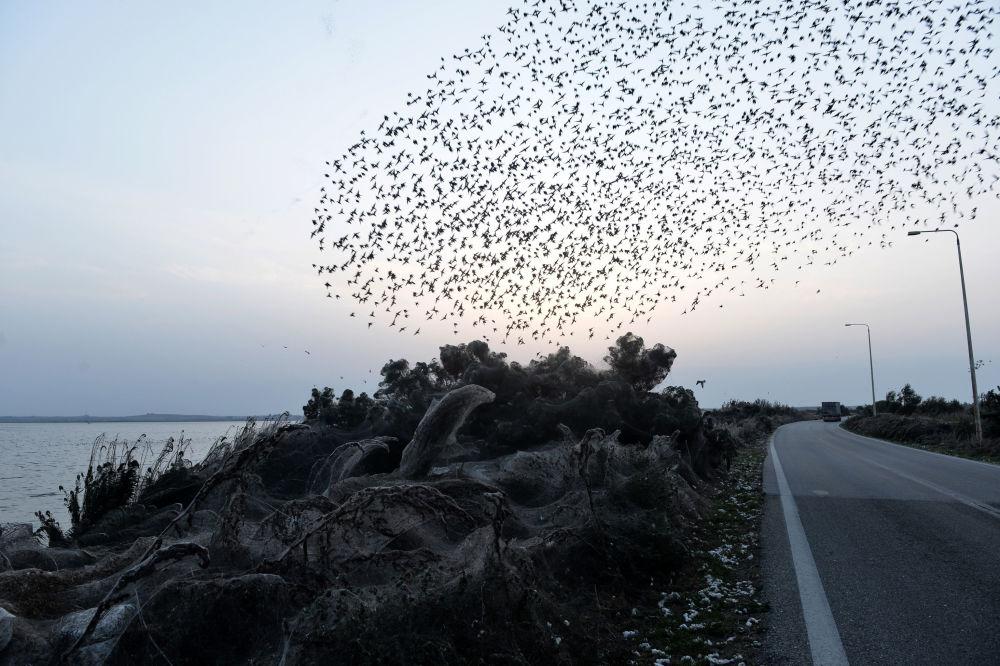 Bando de pássaros sobrevoa floresta coberta por teia de aranha à beira do lago grego