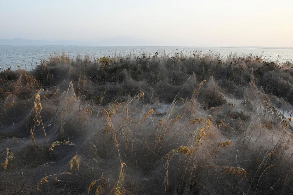 Ao redor do lago grego, a vegetação é pouco vista, pois permanece coberta por uma camada densa de teia de aranha