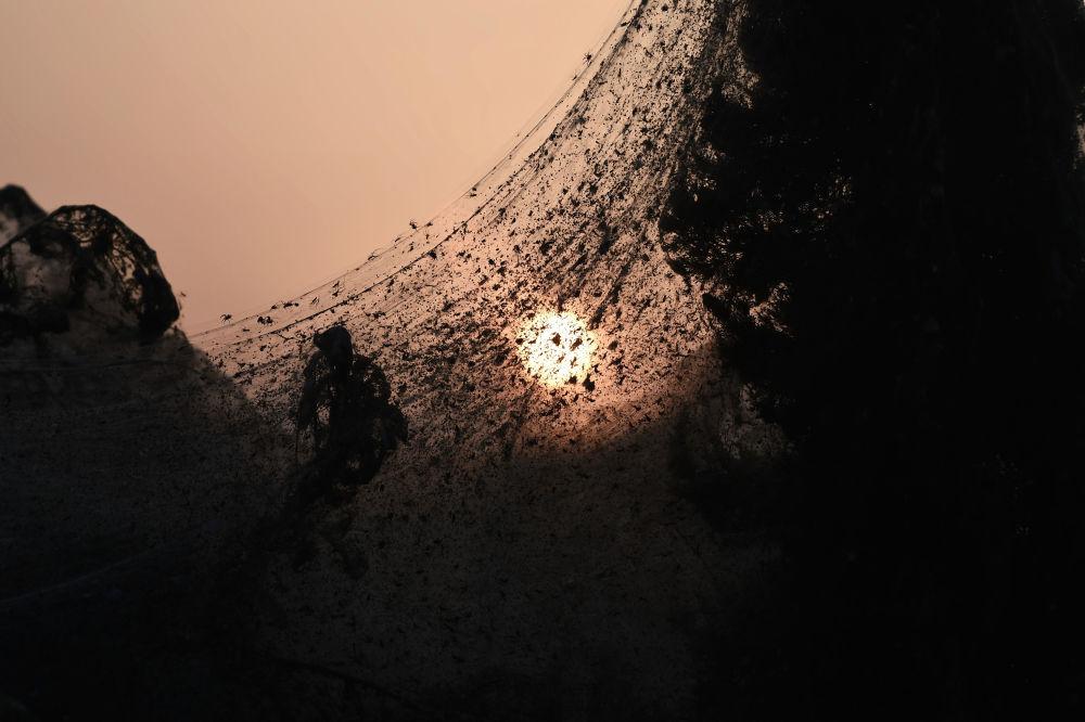 Rara imagem que mostra teia de aranha extremamente fina com o pôr do sol no segundo plano