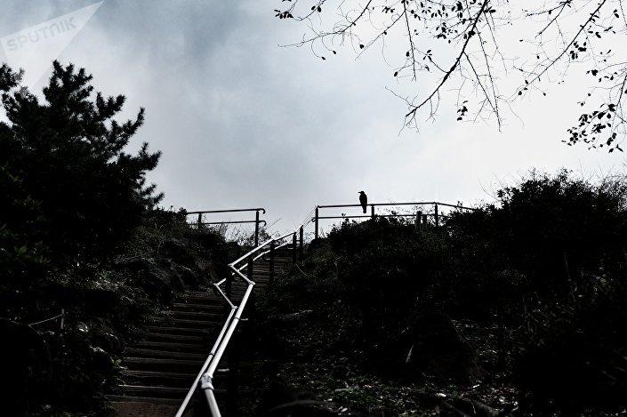 Parque do monte  Hakone, um dos mais altos em Tóquio