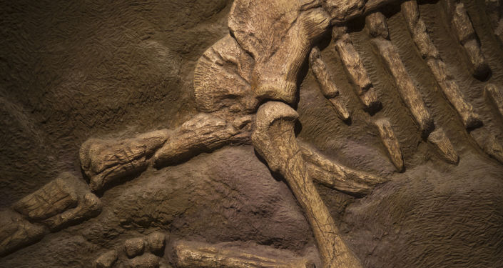 Fósseis de dinossauro (imagem referencial)