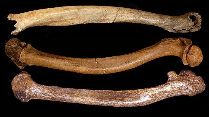 Ossadas de seres humanos da época de Plistoceno