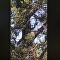 Imensa cobra de mais de 3 metros escala árvore na maior euforia