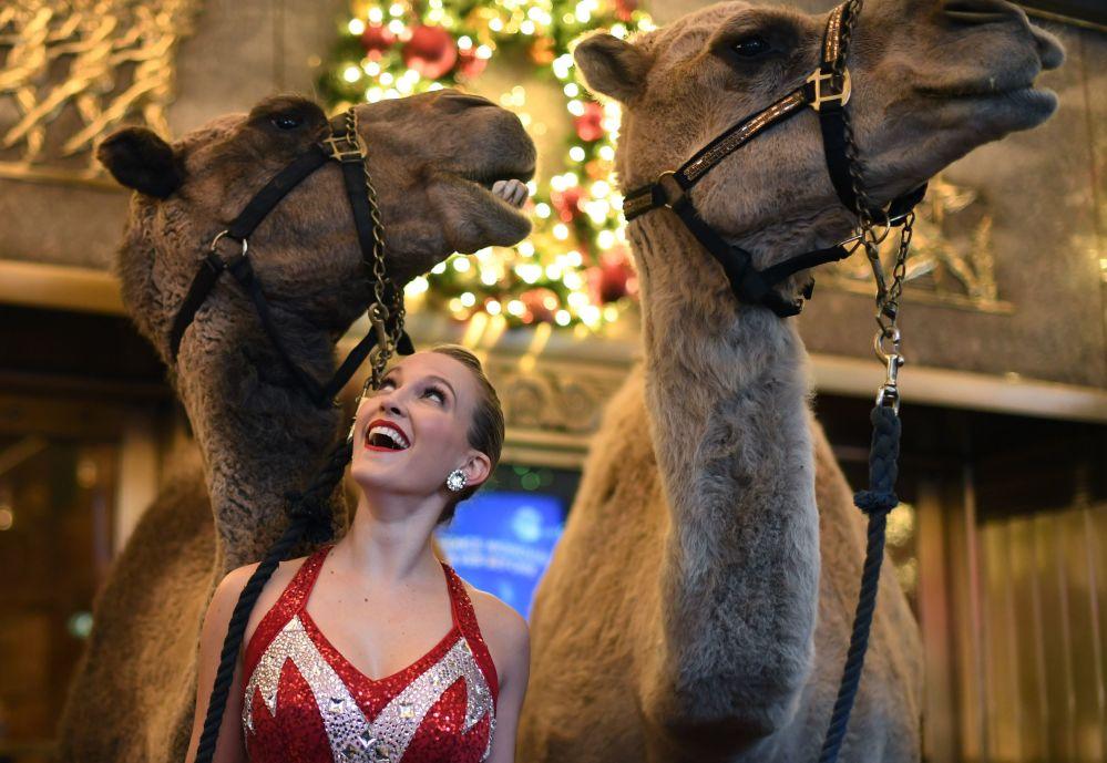 Uma participante da turma de danças Radio City Rockette posa perto de camelo antes do início de um show natalino, em Nova York