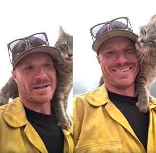 Gatinho faz carinho em bombeiro após ser retirado de incêndio na Califórnia
