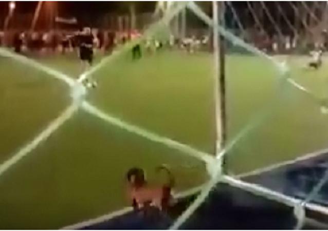 Melhor goleiro: cachorro faz defesa espetacular de pênalti no Brasil