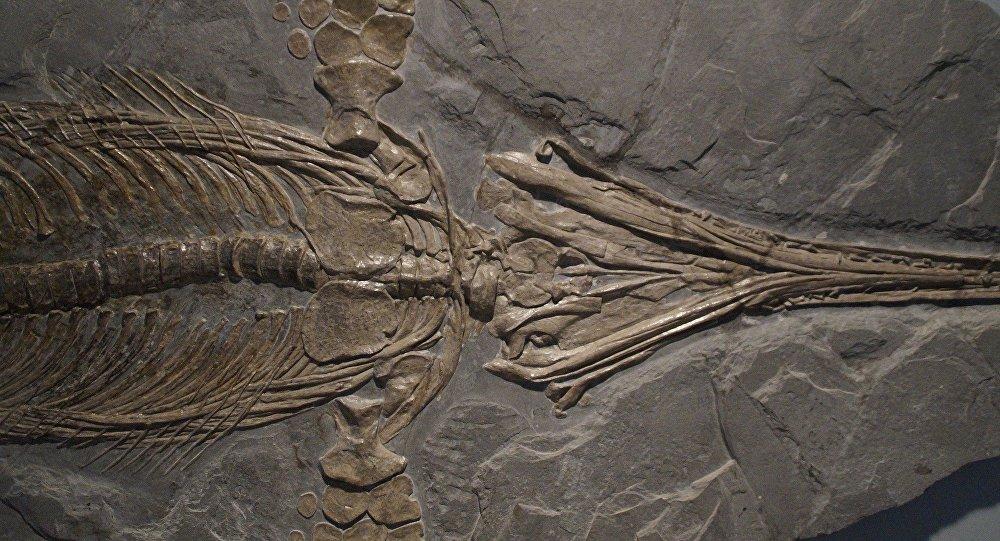 Fóssil (imagem ilustrativa)