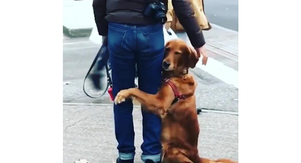 Cachorro demonstra carinho abraçando humano na rua