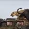 Búfalos cercam leoa