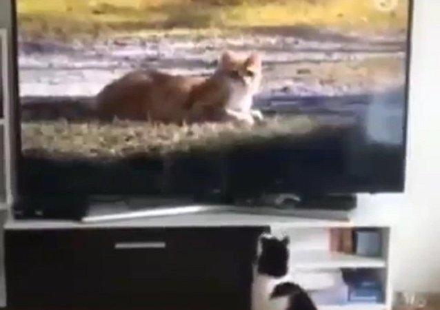 Gato aparece em programa de televisão