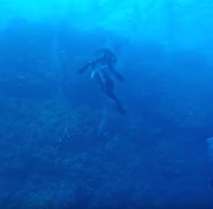 Tubarão crava dentes na perna de mergulhador