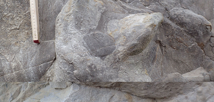 Pegadas de dinossauros pertencem a sete espécies que viveram entre 100 e 145 milhões de anos atrás
