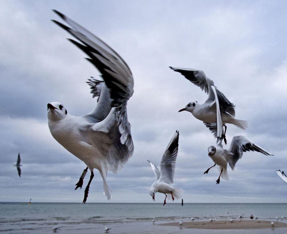 Gaivotas voam sobre o mar Báltico, na Alemanha