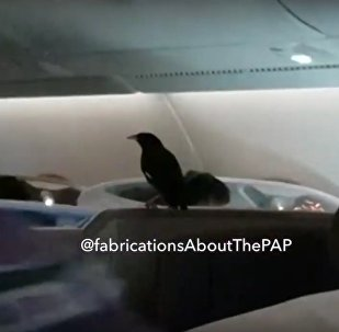 A bird flew on board business class of Singapore Airlines A380 #SQ322 to London
