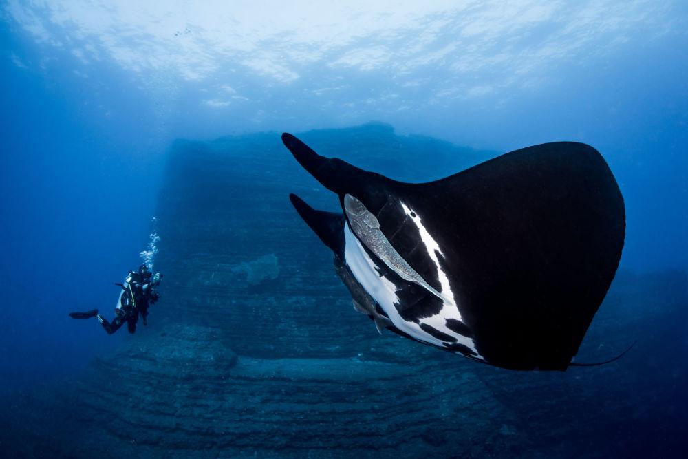 A foto Encontro Especial de Alvin Cheung mostra uma jamanta, também conhecida como peixe-diabo. Ela ficou em 1º lugar entre os fotógrafos principiantes no Concurso Anual de Fotografia Subaquática de 2018