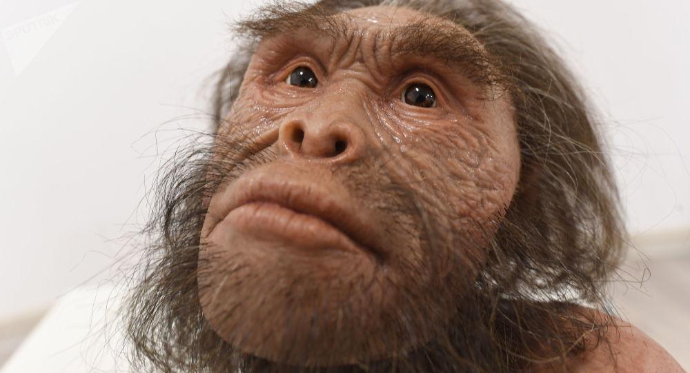Reconstrução dos ancestrais Homo naledi