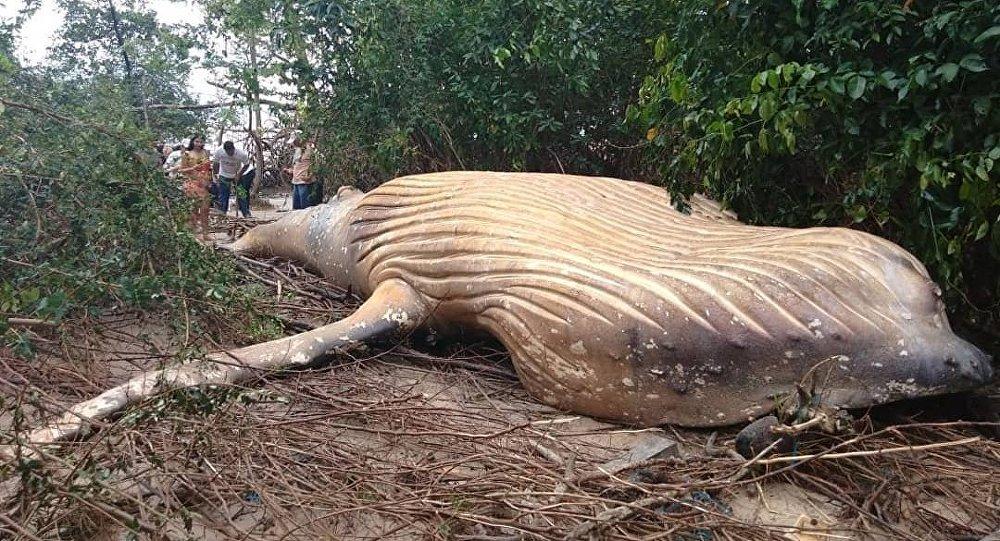 Balei morta em floresta