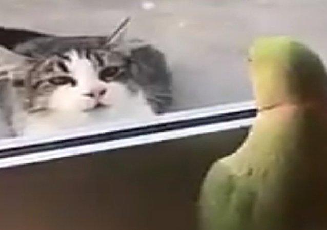 Gato e papagaio brincam de pique-esconde