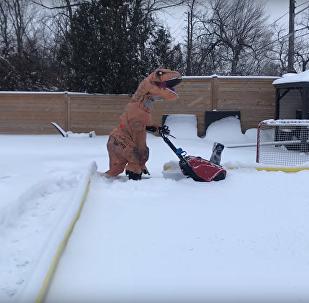 'Tiranossauro' engraçado limpa neve no quintal canadense